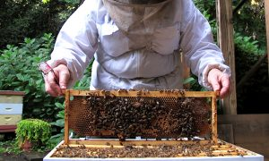 Episode 414: Backyard Beekeeping