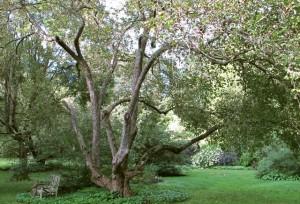 Margaret Roach Apple Tree