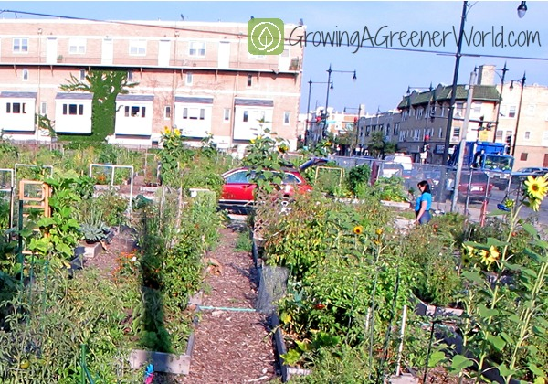 Delicieux Episode 420: New Victory Gardens