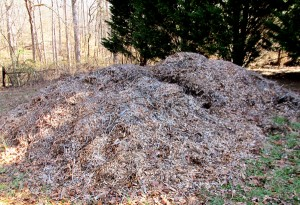 Arborist-Wood-chips-Mulch