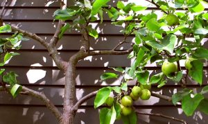 5 Reasons Not To Grow Fruit – And Why They're Wrong