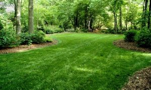 Five Steps to Spring Lawn Renovation