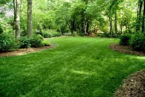 Spring Lawn renovation