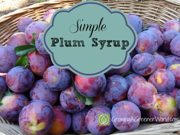 Simple Plum Syrup - Theresa Loe - GrowingAGreenerWorld.com
