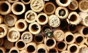 The Mason Bee