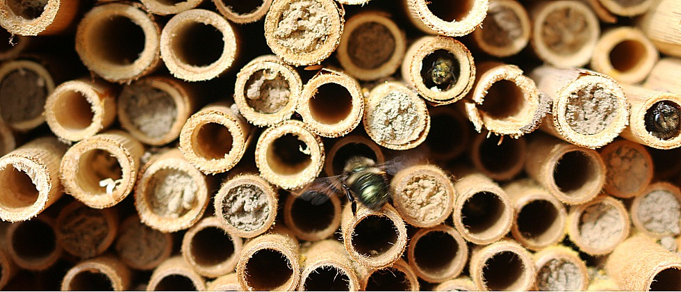 episode 503 solitary bees growing a greener world