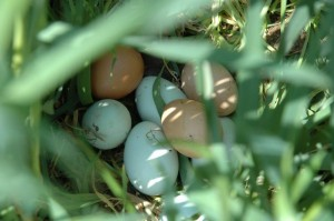 507 Eggs