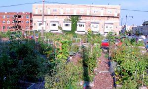 Episode 513 – Urban Gardening