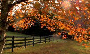 Episode 512 – Fall Garden Prep