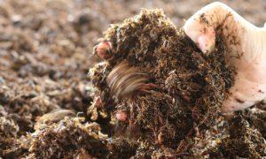 Episode 510 – A Worm Farm