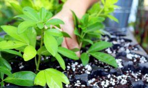 Episode 515 – Making More Plants