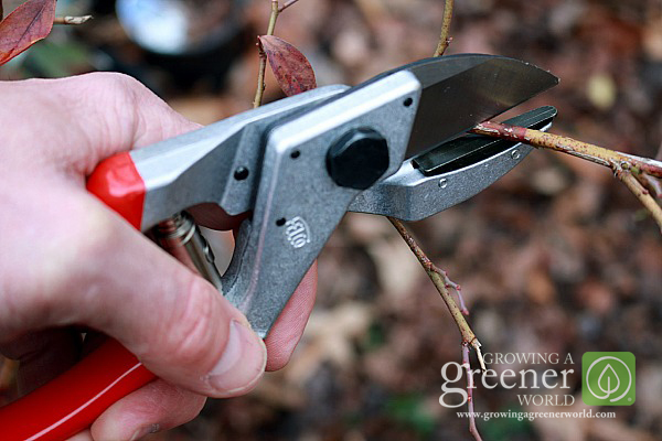 How to prune - GrowingAGreenerWorld.com