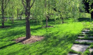 Five Steps to a Beautiful Organic Lawn
