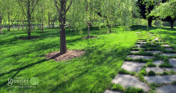 Organic Lawn Care - GrowingAGreenerWorld.com