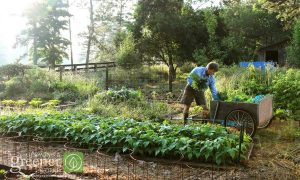 Gardeners Pride - GrowingAGreenerWorld.com