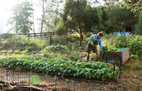 Gardeners Pride - GrowingAGreenerWorld.com