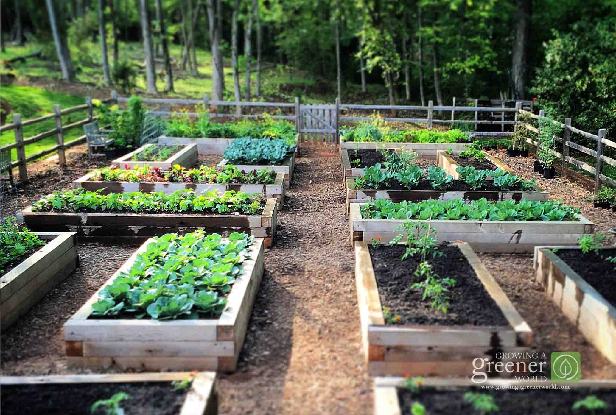 Benefits Of Raised Vegetable Garden Beds