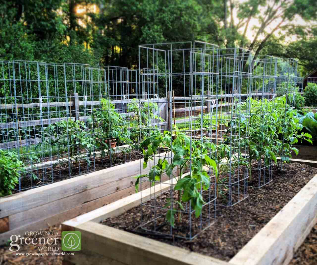 Make the Ultimate Tomato Cage - GrowingAGreenerWorld.com
