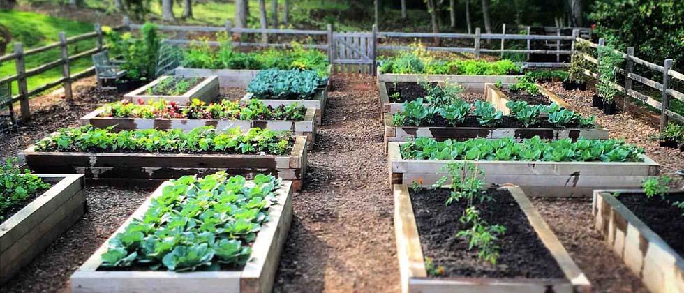 Three Key Benefits Of Gardening In Raised Beds