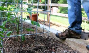 The Ultimate Tomato Cage in 5 Simple Steps