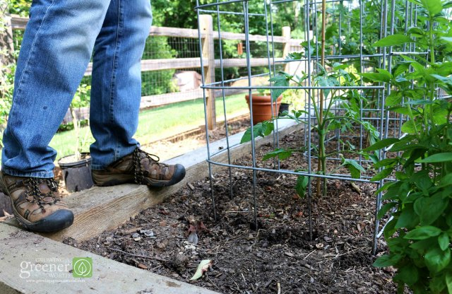 Make the Ultimate Tomato Cage - GrowinreenerWorld.com Tomato Garden Design Triangular Html on