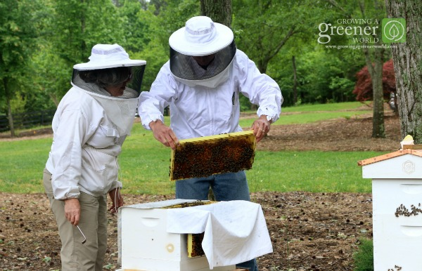 Begining Backyard Beekeeper - GrowingAGreenerWorld.com