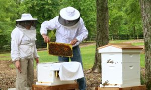 Beginner Backyard Beekeeping - GrowingAGreenerWorld.com