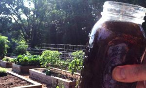 Liquid Worm Juice; Superfood for Organic Gardens