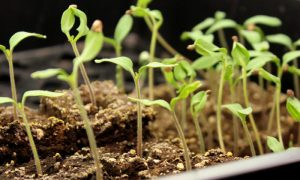 Seed Starting 101 - GrowingAGreenerWorld.com