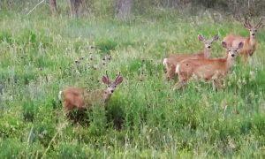 Episode 607: Oh Deer-Dealing With Garden Pests