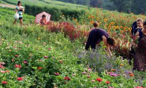 Rodale Institute Cutting Garden-GrowingAGreenerWorld.com