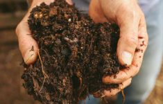 Compost-GrowingAGreenerWorld.com