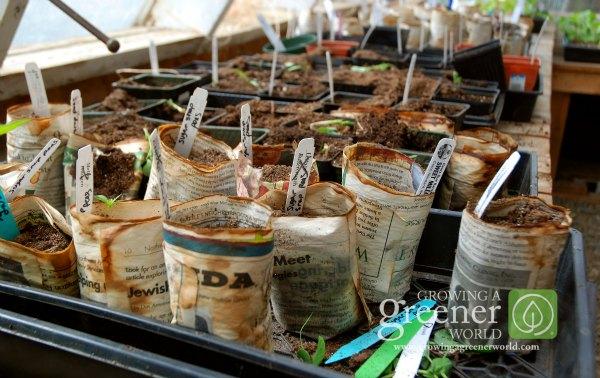 starting-seeds-GrowingAGreenerWorld.com