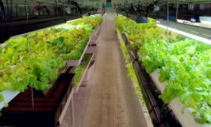 Episode 624 – Growing Without Soil: Hydroponics