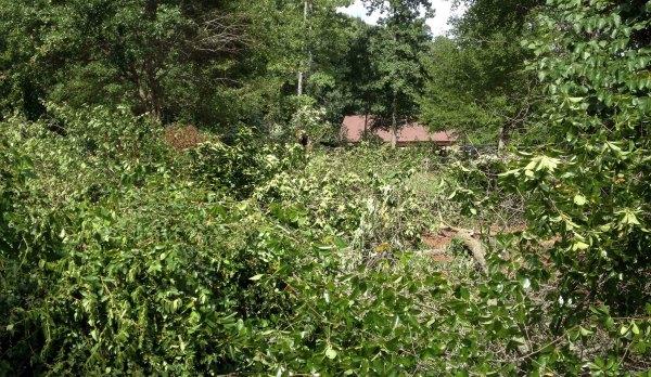 designing a landscape-overgrown mess-GrowingAGreenerWorld.com