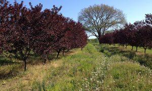 708 – Beyond Veggies: Adding Fruit to Your Food Garden