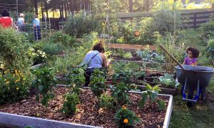 711 – Community Gardens: Growing So Much More Than Plants