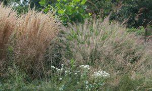717 – Native and Invasive Plants & Certified Wildlife Habitats