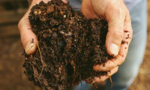 Feed the Soil, Let the Soil Feed the Plants – The Heart of Organic Gardening