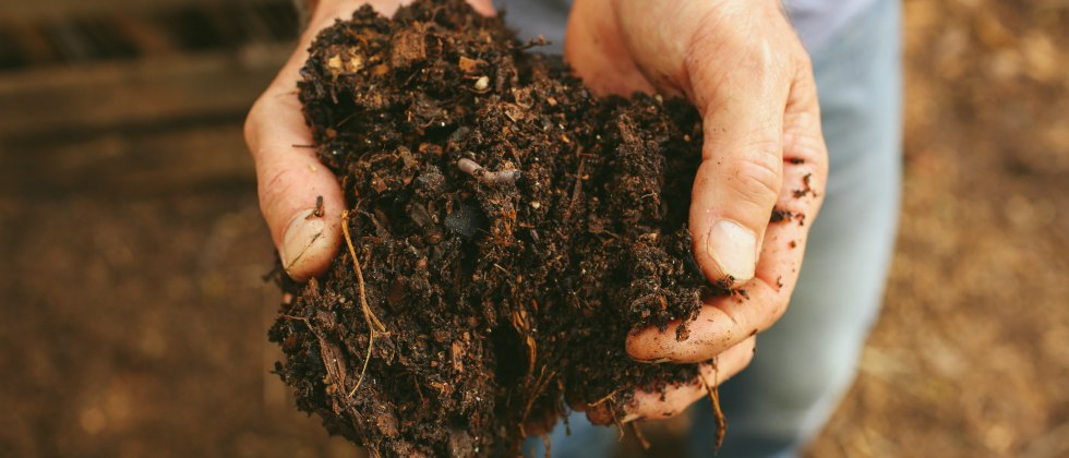Feed the Soil with Compost and the soil will feed the plants-GrowingAGreenerWorld.com