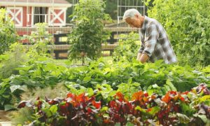Joe Lamp'l tends his garden at GGWTV GardenFarm-GrowingAGreenerWorld.com