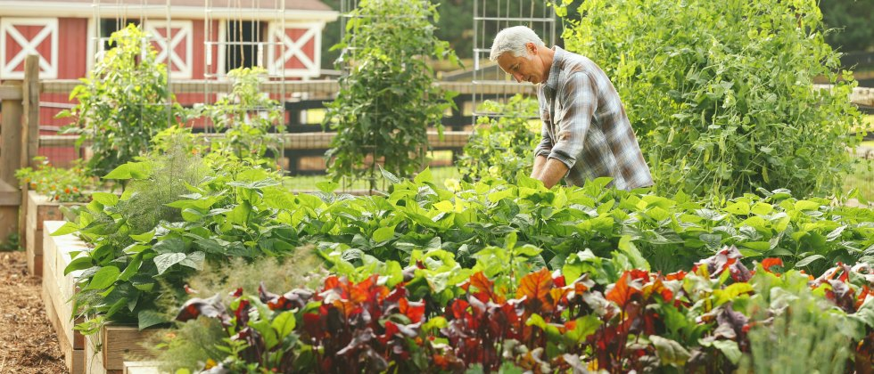 Gardening Shows On Pbs Garden Ftempo