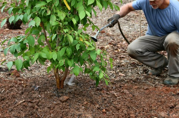How to plant a tree-knock out air pockets with a stiff blas of water-GrowingAGreenerWorld