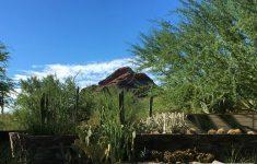 Episode-806-Desert-Botanical-Garden