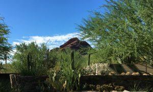 Episode 806 – Gardening in the Desert Southwest