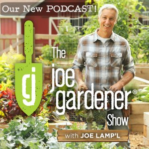 Episode 803 Epic Tomatoes With Craig Lehoullier Growing A