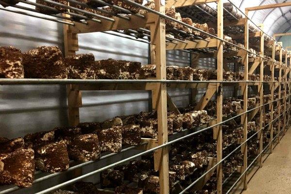 sparta mushrooms