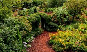 Episode 809 – In Susan's Garden