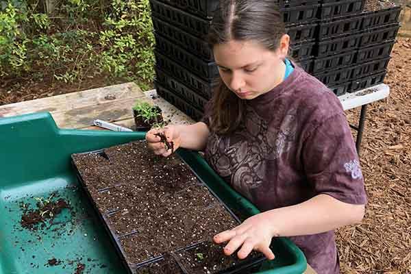 Transplanting seedlngs