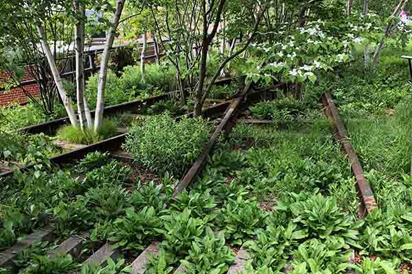 New York High Line Park Featured Pbs Episode Growing A Greener